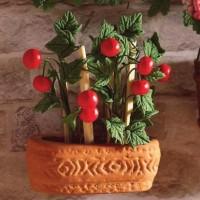 4951  Tomato Plant
