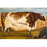 Shorthorn Ox