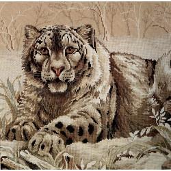 Dm -The Snow Leopard