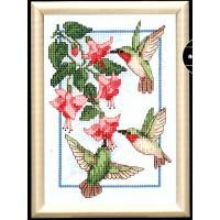 Dm-Hummingbirds & Fuchsia