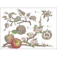 Botanical-Apples